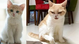 Funny Cat and Cute Kittens Videos Compilation #6