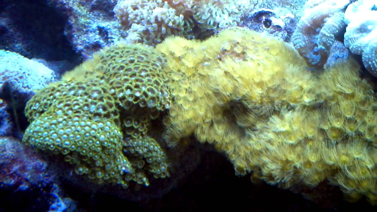 Reef Aquarium Fort Lauderdale Museum of Discovery and ...