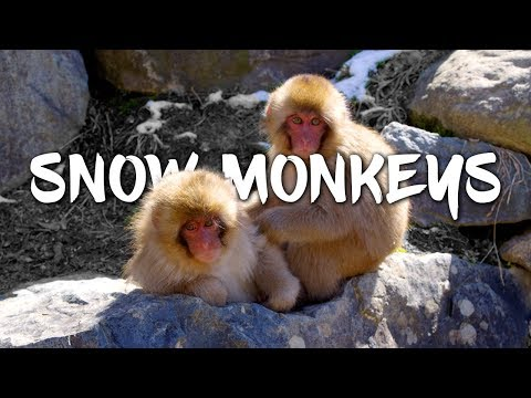 Snow Monkeys in Japan 5K Retina 60p (Ultra HD) from YouTube · Duration:  3 minutes 21 seconds