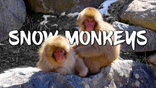 Snow Monkeys in Japan 5K Retina 60p (Ultra HD)