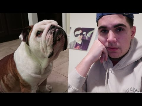 He's not doing well - My Bulldog Oscar