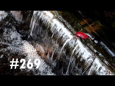 VLOG #269 LE KORAKU-EN D'OKAYAMA,UN DES 3 PLUS BEAUX JARDINS DU JAPON!