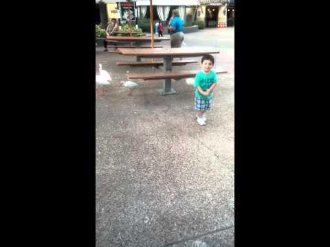 Gianni scared of birds