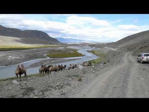 Горный Алтай : Турбазы, кемпинги, туркомплексы, базы отдыха
