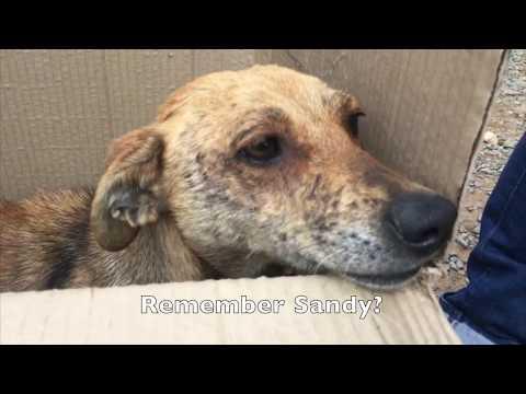 Sandy Needs Her Human!