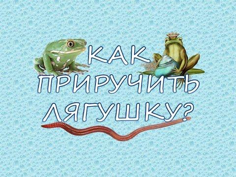 Вопрос: Как приручить дикую лягушку?
