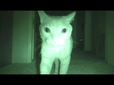 What Cats Do At Night - Purranormal Cativity