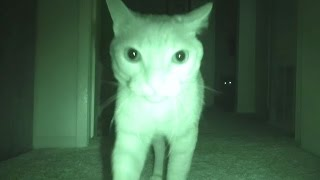 What Cats Do At Night... thumbnail