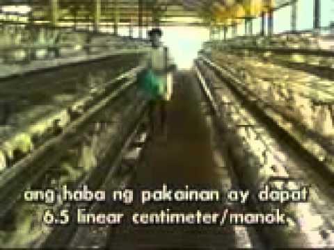 poultry production AP)