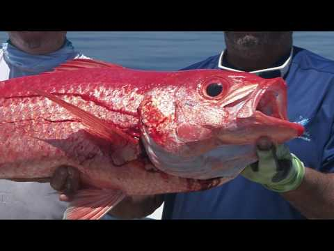 Yankee Capts :30 promo clip - Florida Sport Fishing TV