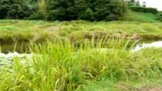 とんぼ王国(トンボ自然公園)