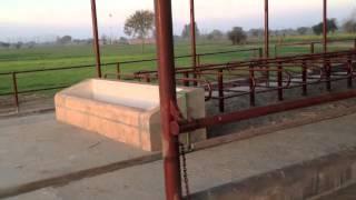 Abbas Dairy Farm