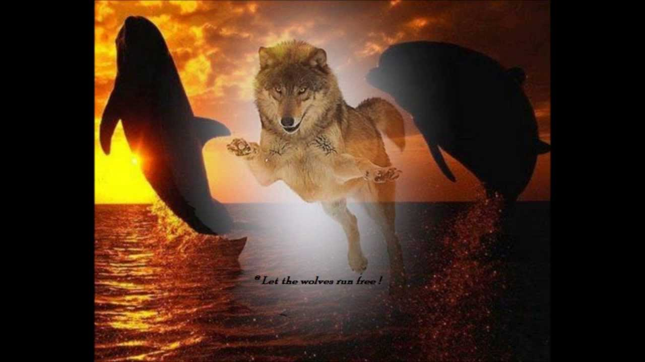 Heroes.......Dolphins & Wolves.....David Bowie - YouTube - photo#7