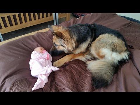 Sheba and Rose