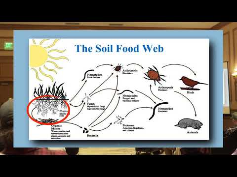 Growing Cannabis Organically & the Soil Food Web - Jeff Lowenfels