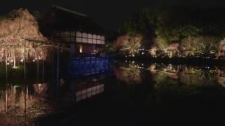 2017年4月に実施されました「平安神宮 紅しだれコンサート 2017」のダイ...