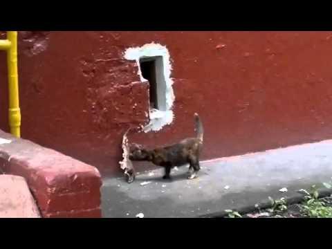 Коты и рыба [забавное фото] | 360x480