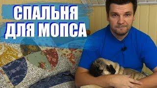 Спальня для щенка мопса Жорика. Где спит моя собака, лежанка или...