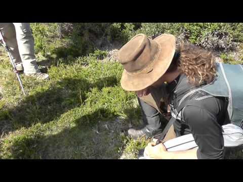 Tarkine BioBlitz 2015 - A Short Film By BRENDAN KAYS