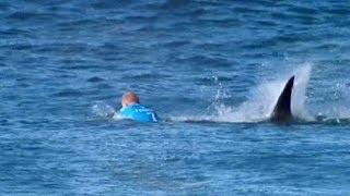 Сърфист наби акула - Новините на Нова (20.07.2015г.)