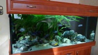 Обзор модели моего аквариума от Meduza6(Германия)