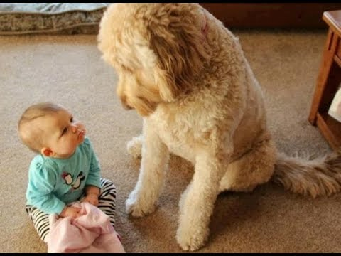 Incredible Moments Dogs Teach Babies  – Dog and baby are best friend to grow up together