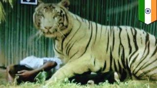 インド・ニューデリーで、動物園を訪れていた男性がホワイトタイガーに...