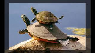 TOP 20 Awesome Animals Pet Funny Animals Funniest Pets 2019 😇
