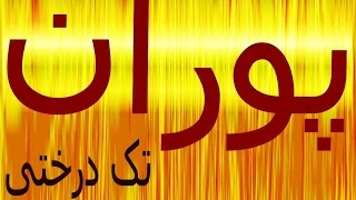 Pouran (تک درختی (بی پناه  (best quality / original)