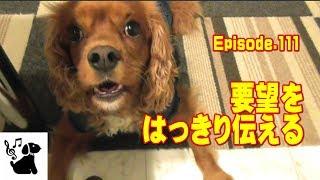 犬(キャバリア)と鳥(セキセイインコ)の面白可愛い動画ビデオ日記。 ...