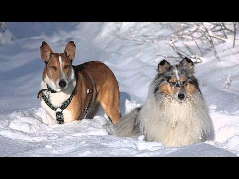 Slovak paradise - winter trip with collies