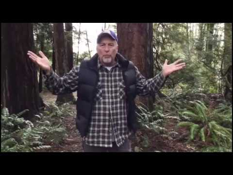 Bigfoot and disappearing people
