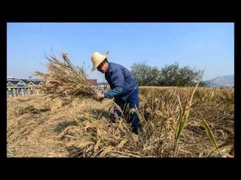 Глава Забайкалья назвал цену аренды земель региона для китайцев