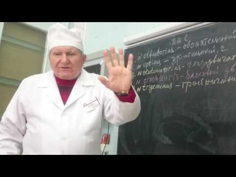 Бадалян Невропатология studfilesru