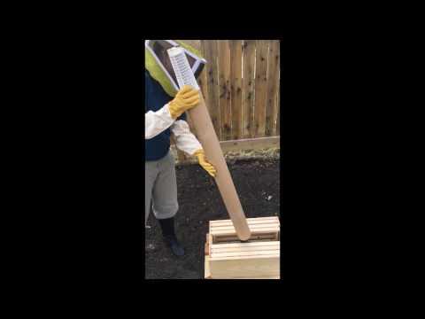 Urban beekeeping in Edmonton