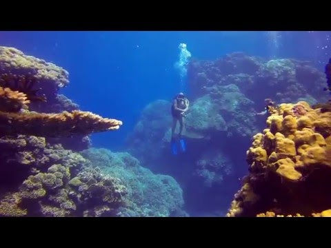 Video Of The Week | Scuba diving in Egypt