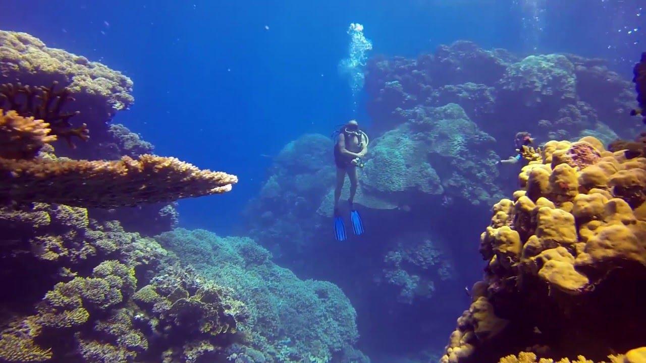 水肺潜水_Scuba diving in Egypt - YouTube