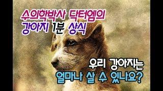 [강아지 수명]우리 강아지는 얼마나 살 수 있나요?