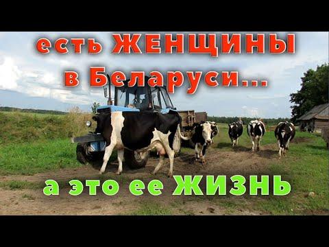 Небольшой обзор хозяйства с коровами