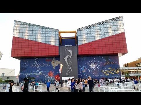 Vlog 37 - Osaka Aquarium Kaiyukan