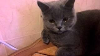 Кошка плачет😢😢😢😢😢