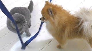Котенок не дает играть щенку. КОТ ПРОТИВ СОБАКИ