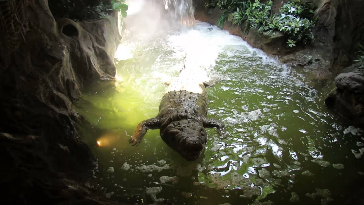 Cleveland metroparks zoo fake crocodile alligator youtube for Cleveland metroparks fishing report