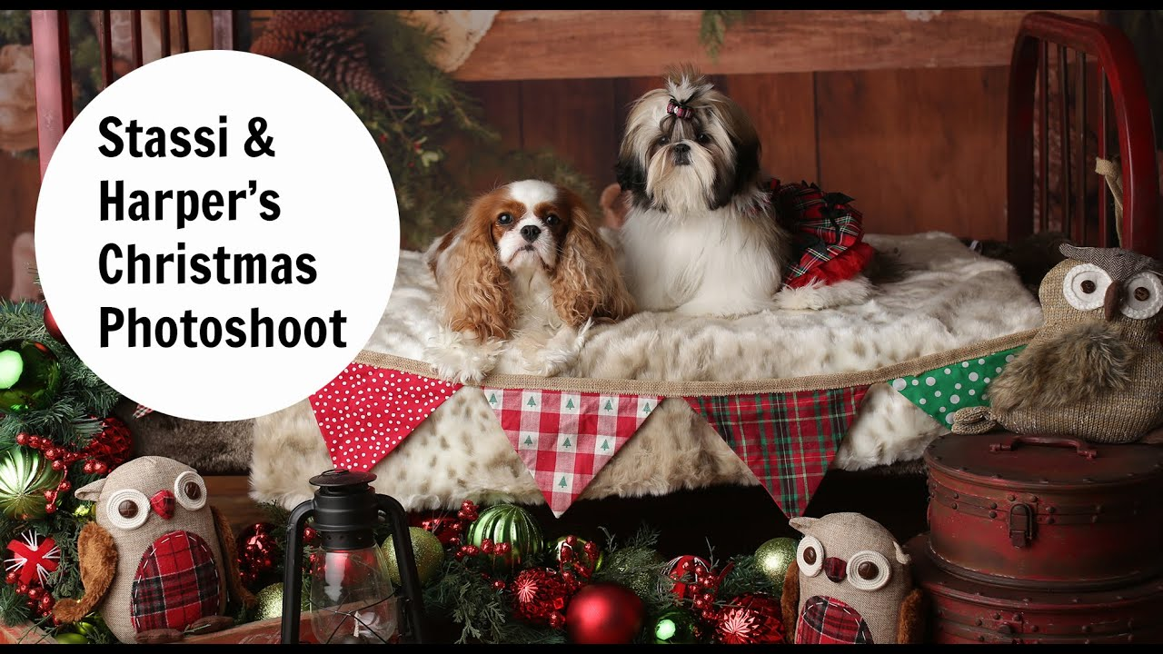 Christmas 2015 dog photography dog photo shoot - YouTube