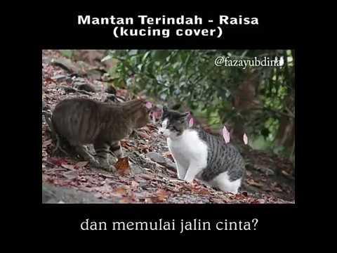 Raisa - Mantan Terindah ( kucing cover ) / Armada - Asal Kau Bahagia ( ayam cover )
