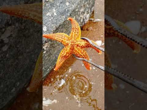 Fishing Videos - Catching Seafood Include Fish, Crab, Octopus... Fishing For Relaxing #366