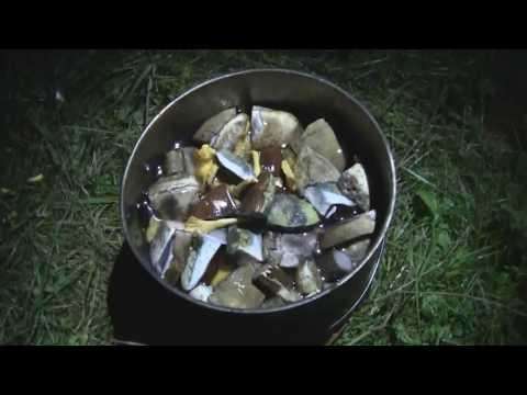 видео: все впервые/лес/грибы/тверская область