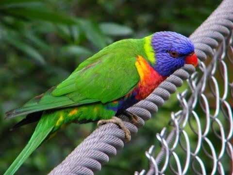 The Varied World of Australian Birds : Nature Documentary on Australia's Wild Birds
