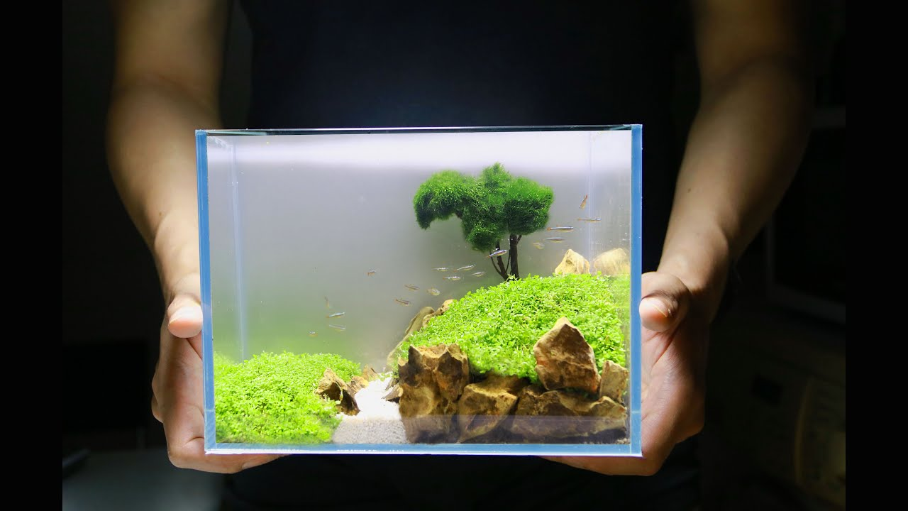 How To Aquascaping Small Planted Aquarium How To No Co2 No Ferts No Filter Nano Tank Setup Youtube