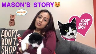 HOW I RESCUED MY SHELTER CAT + ADOPTION TIPS